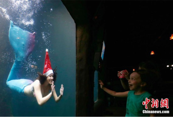 巴西水族馆潜水员头戴圣诞帽扮美人鱼