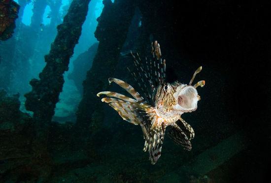 实拍红海海底震撼美景海洋生物千奇百怪