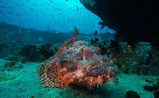 实拍红海海底震撼美景 海洋生物千奇百怪