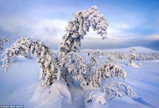 摄影师拍摄俄罗斯极寒地带的树木