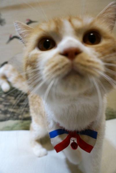 当任性猫星人遇上阿里妈妈 猫奴的世界你不懂