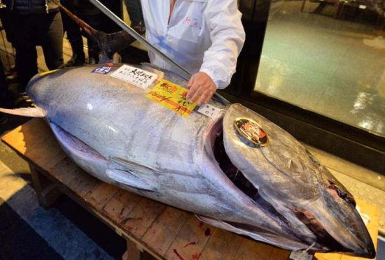 日本一条蓝鳍金枪鱼新年拍出23万元高价