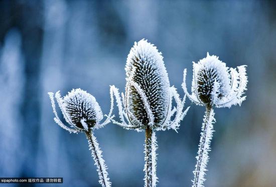 英国摄影师镜头下的白霜覆盖植物