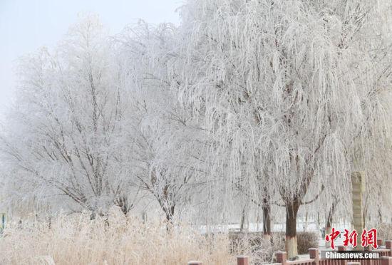 """""""三九天""""来袭新疆博湖地区现雾凇美景"""