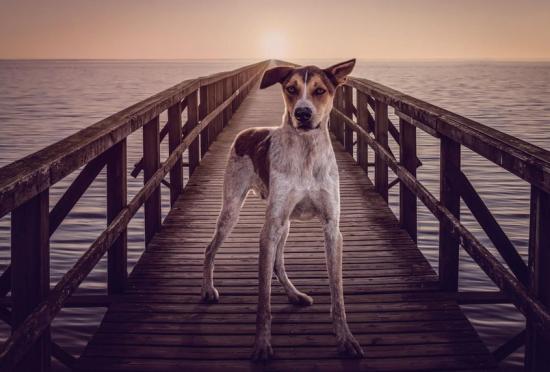 摄影师拍摄狗狗创意肖像反对虐待动物