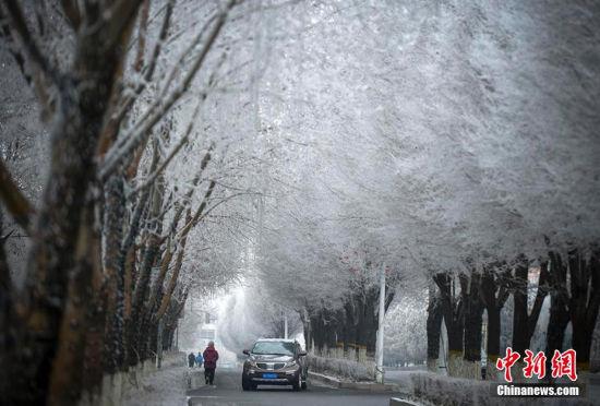 乌鲁木齐城区出现大面积的雾凇美景