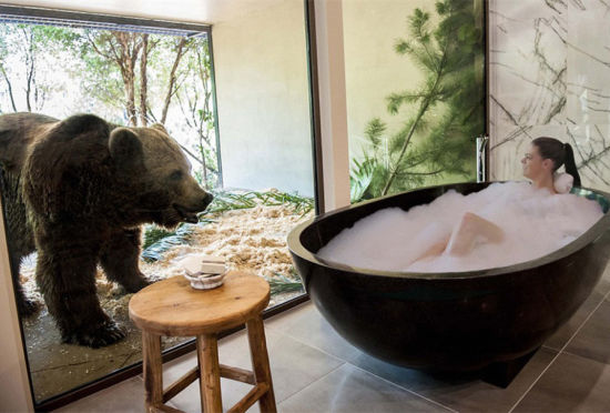澳大利亚动物园开旅馆房客与熊共浴