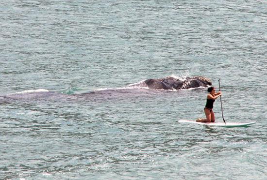 惊险一幕:南非女子海上冲浪遭鲸鱼跟踪