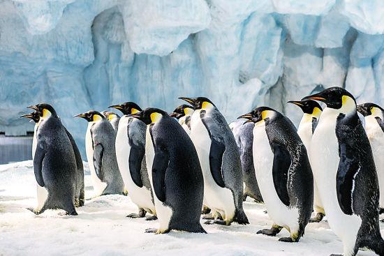 动物 企鹅 550_367