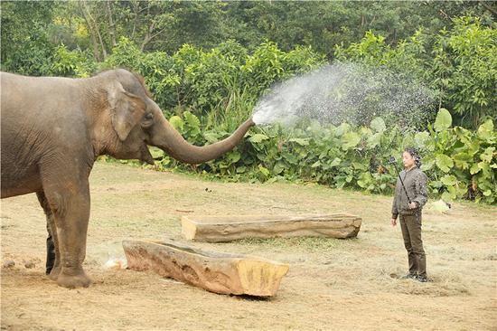 大象喷水手绘图