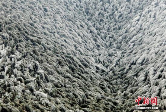 江西井冈山迎首场降雪雾凇竹海雪景如画