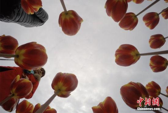 湖南举办世界名花节60万珍稀郁金香亮相