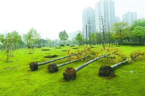 文华公园密集种树 市民吐槽没空间活动