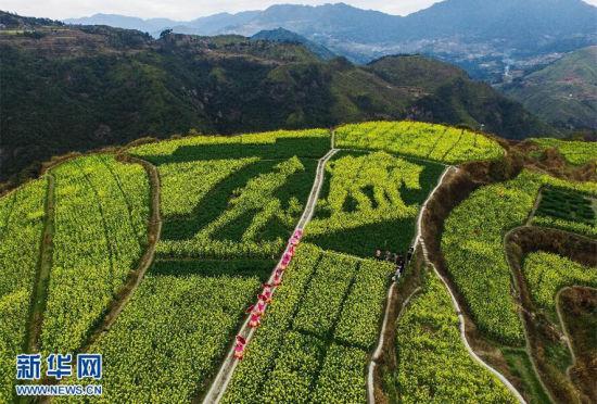 浙江高山梯田现数十幅创意油菜花图案