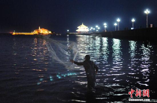 青岛梭鱼扎堆市民昼夜下海撒网捞鲜