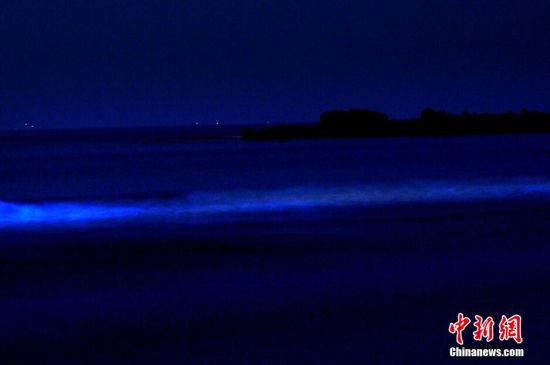 受海潮影响青岛再现迷人夜光藻蓝色带