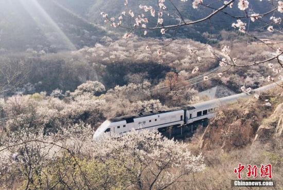和谐号列车穿越北京居庸关花海(多图)
