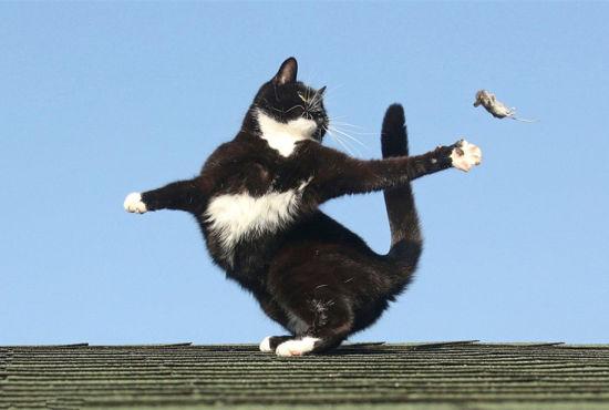 小猫与老鼠房顶嬉戏上演《猫和老鼠》