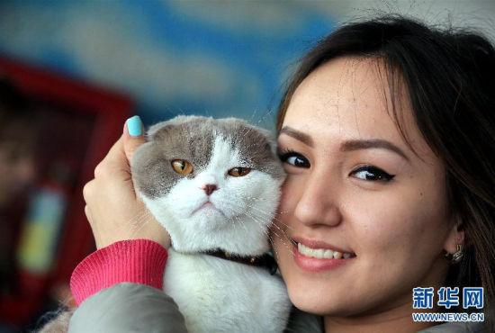 150多只各色萌猫参加比什凯克国际猫展
