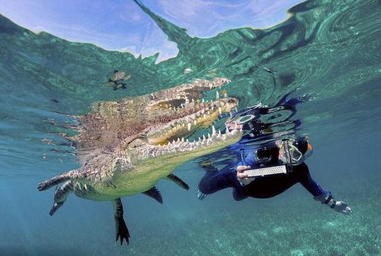澳大利亚父子与鳄鱼同游度最刺激假期