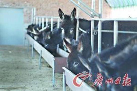 一种是龙头企业,坚持使用100%优质驴皮熬制阿胶,这种产品价格肯定会