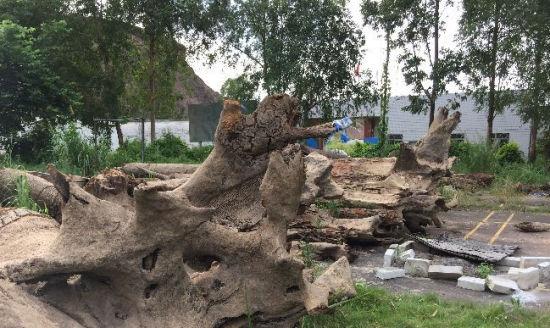 惠州东江江底发现千年乌木
