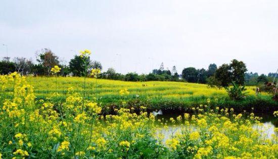 广州海珠湿地公园