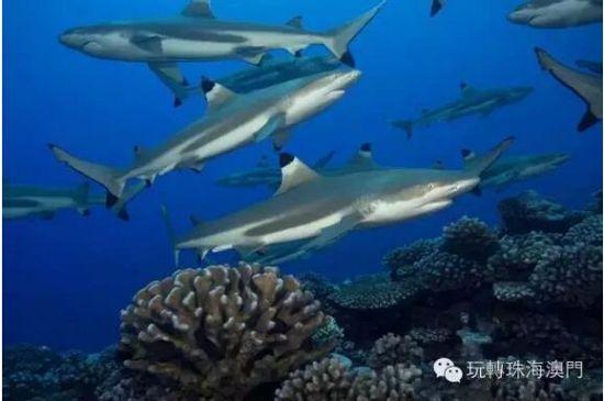 壁纸 动物 海底 海底世界 海洋馆 水族馆 鱼 鱼类 550_365