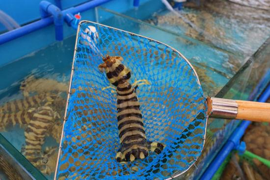 天河区首个海鲜市场盛大开业