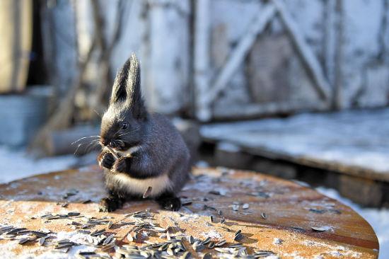松鼠是不是冬眠动物