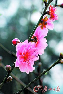 大自然美女 竖屏春天 桃花