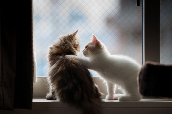 窗台上的喵星人