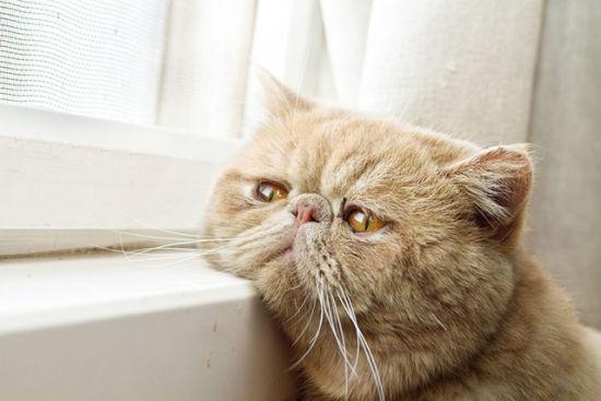 动物摄影:窗台上的喵星人
