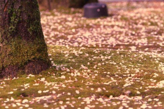 绚丽多彩的东瀛日本的春秋美景摄影