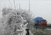 韶关罕见正月雪
