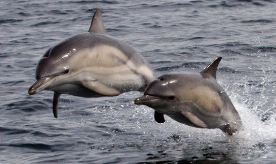 高清鼠海豚|鼠海豚图片|[29p]鼠海豚