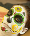 人体彩绘骷髅头