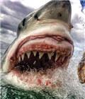 拍摄大白鲨