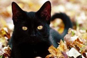 实拍猫咪偷学狗叫 被发现变回猫叫